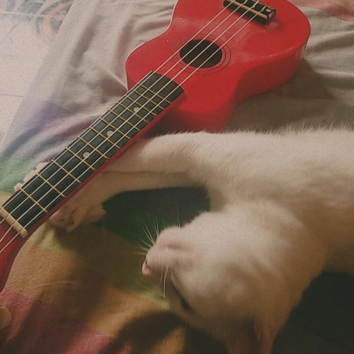 original sound - Kiki. :3 TikTok