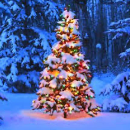 original sound - christmas_loverrrrrrrrrr TikTok